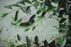 nature19