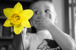 Oopsie Daffodil!